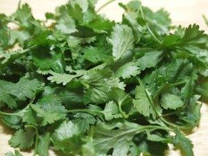 cilantro-bunch