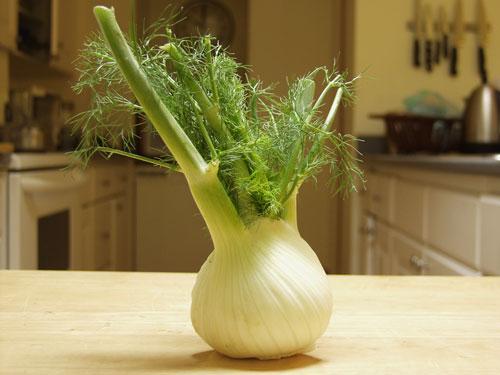 fennel-bulb